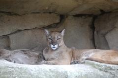 Zoo_am_Meer_Bremerhaven_060517_IMG_4833