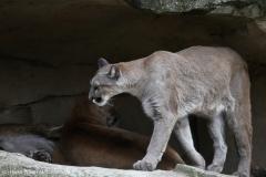 Zoo_am_Meer_Bremerhaven_060517_IMG_4843