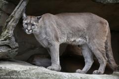 Zoo_am_Meer_Bremerhaven_060517_IMG_4844