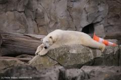 Zoo_am_Meer_Bremerhaven_060517_IMG_4850