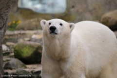 Zoo_am_Meer_Bremerhaven_060517_IMG_4852