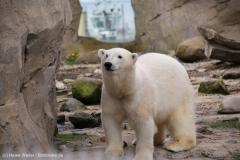Zoo_am_Meer_Bremerhaven_060517_IMG_4853