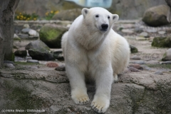 Zoo_am_Meer_Bremerhaven_060517_IMG_4858