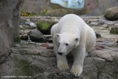 Zoo_am_Meer_Bremerhaven_060517_IMG_4860