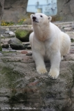 Zoo_am_Meer_Bremerhaven_060517_IMG_4862