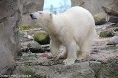 Zoo_am_Meer_Bremerhaven_060517_IMG_4863