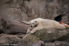 Zoo_am_Meer_Bremerhaven_060517_IMG_4866