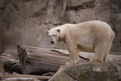 Zoo_am_Meer_Bremerhaven_060517_IMG_4874