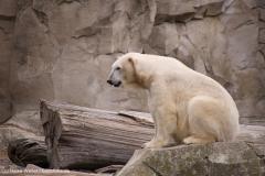 Zoo_am_Meer_Bremerhaven_060517_IMG_4880