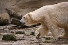 Zoo_am_Meer_Bremerhaven_060517_IMG_4883