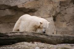 Zoo_am_Meer_Bremerhaven_060517_IMG_4887