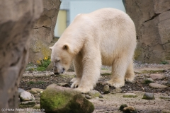 Zoo_am_Meer_Bremerhaven_060517_IMG_4891