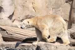 Zoo_Bremerhaven_100516_IMG_1772