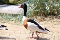 Zoo_Bremerhaven_100516_IMG_1778