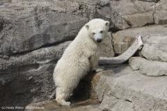 Zoo_Bremerhaven_100516_IMG_1796_1446