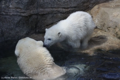 Zoo_Bremerhaven_100516_IMG_1796_1457