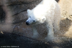 Zoo_Bremerhaven_100516_IMG_1805
