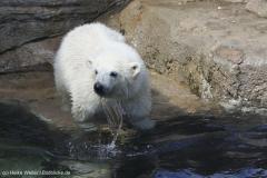 Zoo_Bremerhaven_100516_IMG_1805_1460