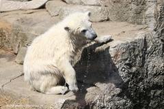 Zoo_Bremerhaven_100516_IMG_1810
