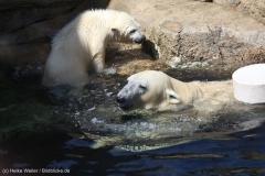 Zoo_Bremerhaven_100516_IMG_1836