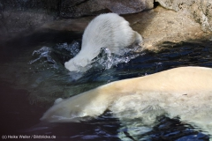 Zoo_Bremerhaven_100516_IMG_1840_1488