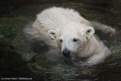 Zoo_Bremerhaven_100516_IMG_1850_1506