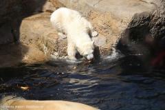Zoo_Bremerhaven_100516_IMG_1866
