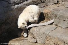 Zoo_Bremerhaven_100516_IMG_1894