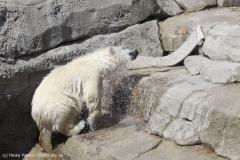 Zoo_Bremerhaven_100516_IMG_1922_1594
