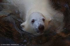 Zoo_Bremerhaven_100516_IMG_2724