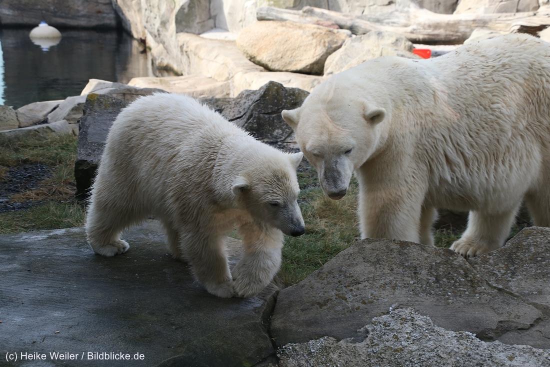 Zoo_Bremerhaven_220916_IMG_09947
