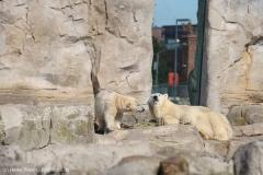 Zoo_Bremerhaven_220916_IMG_09631
