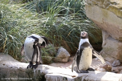 Zoo_Bremerhaven_220916_IMG_09643