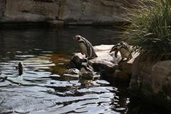 Zoo_Bremerhaven_220916_IMG_09655