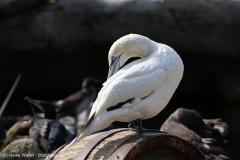 Zoo_Bremerhaven_220916_IMG_09660