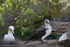 Zoo_Bremerhaven_220916_IMG_09670
