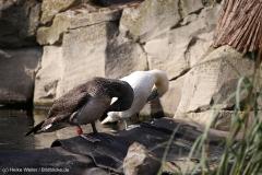 Zoo_Bremerhaven_220916_IMG_09675