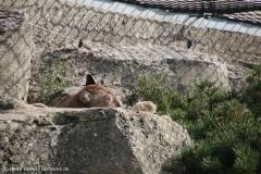 Zoo_Bremerhaven_220916_IMG_09681