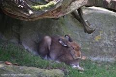 Zoo_Bremerhaven_220916_IMG_09683