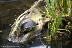 Zoo_Bremerhaven_220916_IMG_09686