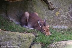 Zoo_Bremerhaven_220916_IMG_09689