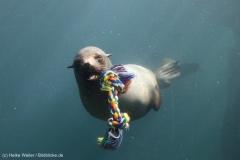 Zoo_Bremerhaven_220916_IMG_09698