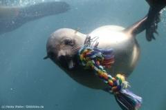 Zoo_Bremerhaven_220916_IMG_09737