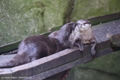 Zoo_Bremerhaven_220916_IMG_09835