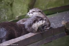 Zoo_Bremerhaven_220916_IMG_09842