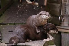 Zoo_Bremerhaven_220916_IMG_09850