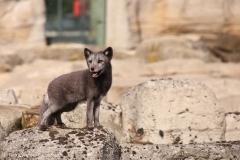 Zoo_Bremerhaven_220916_IMG_09856