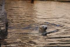 Zoo_Bremerhaven_220916_IMG_09868