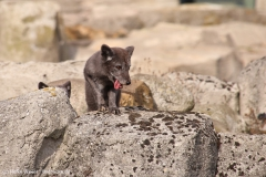 Zoo_Bremerhaven_220916_IMG_09873