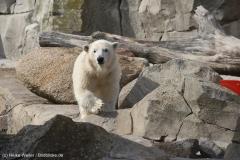 Zoo_Bremerhaven_220916_IMG_09905